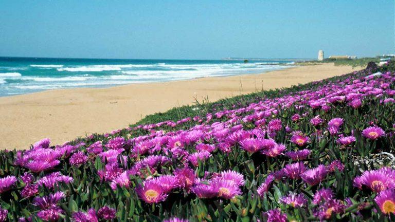 playa-de-el-palmar-vejer